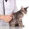 Ветеринарные клиники в Исянгулово